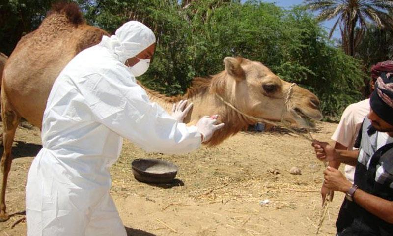 10 Most Dangerous Viruses that Wreaked Havoc Before Corona Virus