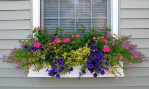 Do not Have a Mini Garden Here is How You Can Give a Green Edge to Your House