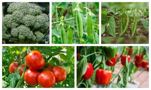 5 Veggies That You Can Grow In Your Kitchen Garden