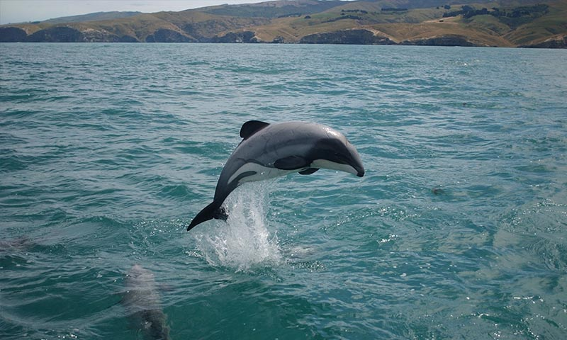 Amazing Facts I Bet You Didn't Know About Dolphins (2)