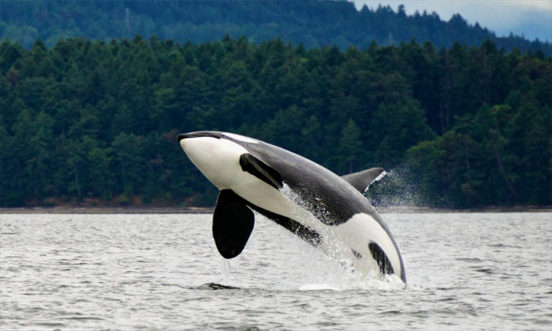 Amazing Facts I Bet You Didn't Know About Dolphins (3)