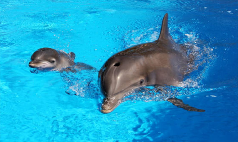Amazing Facts I Bet You Didn't Know About Dolphins (5)