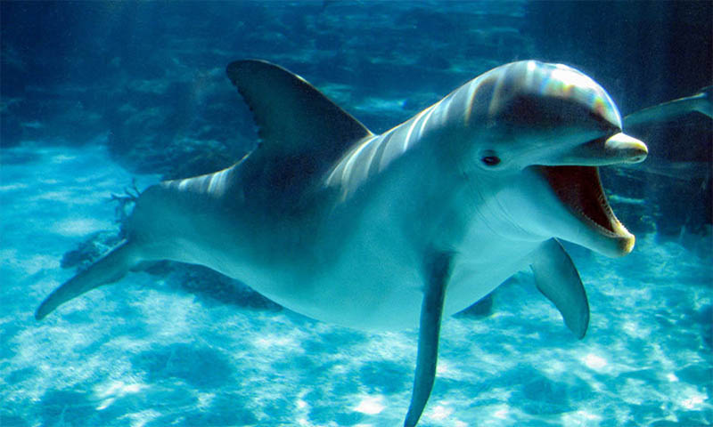 Amazing Facts I Bet You Didn't Know About Dolphins