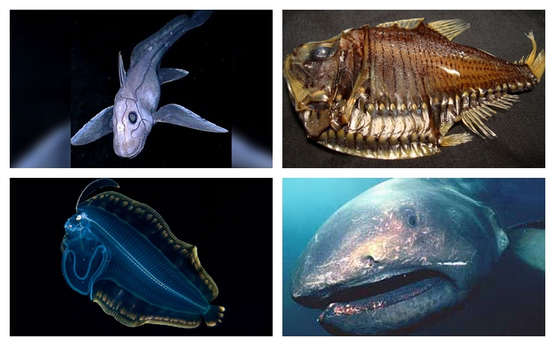 Strange Fish Discoveries From The Deep Sea