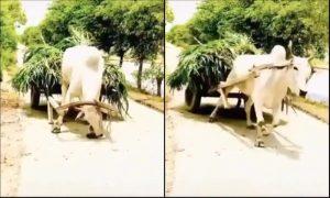 Be Like Mr Bull, Be Atmanirbhar!