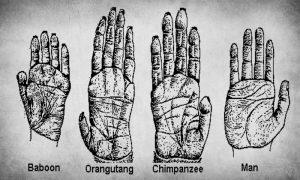 Evolution of Hands
