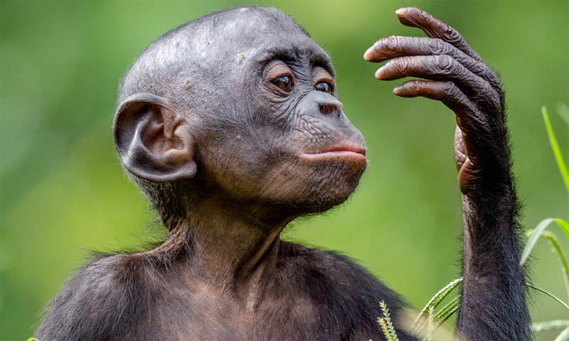 Scientists Claim Monkeys can Think Like Us