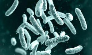 Bubonic Plague: A New Epidemic Looming Over Humanity