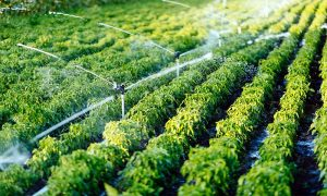 Agriculture Technology Tools That are the Future of Farming