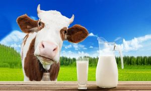 The Dangers of Consuming Raw Cow Milk Exposed!