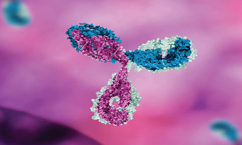 Monoclonal Antibodies: Can Manufactured Antibodies Pull Us Out of the Coronavirus Crisis?