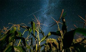 The annual Perseids Meteor Showers are Back Again- Skywatchers Gear Up!