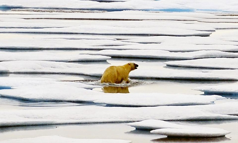 Will There Be No Polar Bears By 2100?