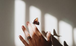 Origin of Butterfly Effect: Busting the Modern Fictional Myth